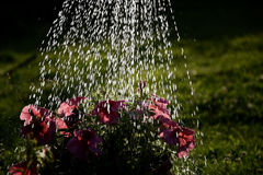 Watering in the garden Royalty Free Stock Images