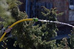 Free Watering Garden From Yellow Hose Stock Image - 184359491