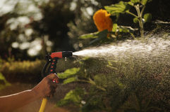 Watering garden with a garden hose Royalty Free Stock Images
