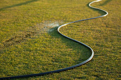 Watering Garden Hose. Watering hose on thirsty green grass Royalty Free Stock Photos