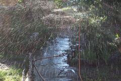 Watering the garden path with a spray of a hose stock image