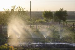 Watering garden plants on the plot. The sun brightly illuminates the fountain of water spray stock images