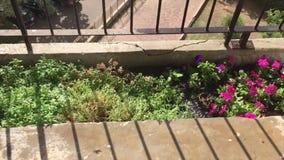 Watering garden plants with water bucket stock video