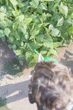 Watering the garden Stock Photos