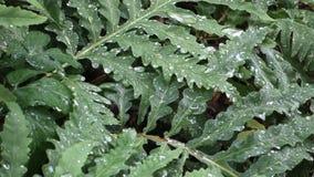 Watering Garden stock footage