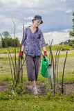 Watering garden stock photos