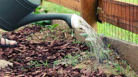 Watering garden stock footage