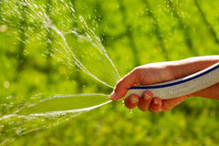 Watering the grass. Women hand watering the backyard grass with a garden hose Royalty Free Stock Images