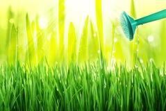 Watering grass Stock Photo