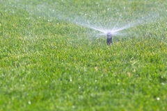 Watering grass Stock Images