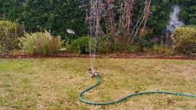Watering the grass lawn with an automatic garden sprayer, close up of a water sprinkler, spraying water in the backyard. Watering the grass lawn with an stock footage