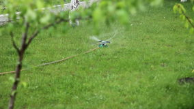 Watering grass in the yard 1080p stock footage