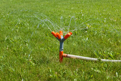 Watering the green lawns with spray pipe Royalty Free Stock Image