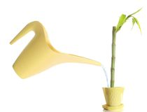 Watering a Green Plant Royalty Free Stock Image