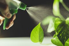 Watering green plants on white and black background with a myst tool stock photo