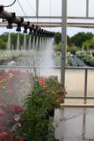 Watering Greenhouse. A greenhouse boom watering annual plants at a plant nursery Stock Photography