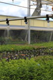 Watering Greenhouse. A close up view of a watering boom inside a greenhouse Stock Photos