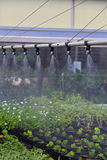 Watering Greenhouse. A close up view of a watering boom inside a greenhouse Royalty Free Stock Images