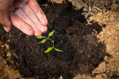 Watering growth the ground barren. Stock Photos