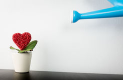 Watering Heart flower. In wihite pot to grow royalty free stock photos