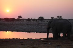Watering hole at dusk Royalty Free Stock Image