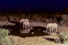 Watering Hole - Etosha, Namibia Royalty Free Stock Images