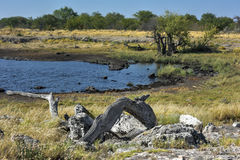 Watering Hole - Etosha, Namibia Stock Images