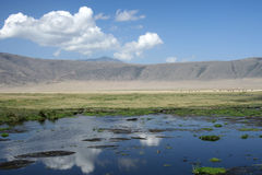 Watering Hole - Ngorongoro Crater, Tanzania, Afric Stock Photo