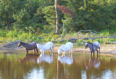 The watering hole Royalty Free Stock Photography