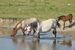Watering hole on the stud. Freedom Royalty Free Stock Photo