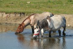 Watering hole on the stud royalty free stock photo