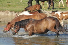 Watering hole on the stud Royalty Free Stock Image