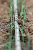 Watering hose on garden soil Royalty Free Stock Image