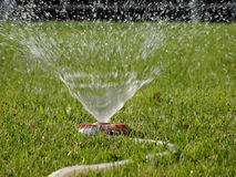 Watering hose with sprinkler system on the wet lawn royalty free stock photo
