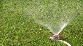 Watering hose with sprinkler system on the wet lawn royalty free stock footage. Garden hose with water sprinkler watering green lawn grass stock video stock video footage
