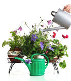 Watering house plants Royalty Free Stock Photo