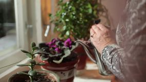 Watering houseplants stock footage