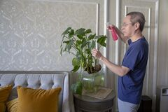 Free Watering Indoor Green, Home Improvement Royalty Free Stock Images - 176984579