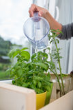Watering the kitchen herbs Royalty Free Stock Photos