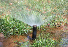 Watering lawn Stock Image