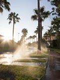 Watering lawn at dawn street Stock Photos