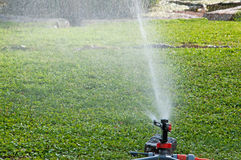 Watering the lawn Stock Image