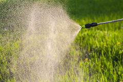 Watering the lawn with a sprayer Stock Photos