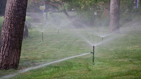 Watering of lawns in park stock video
