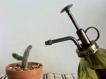 Watering mini garden, cactus Stock Photos