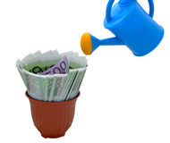 Watering and money in a flower pot Stock Image