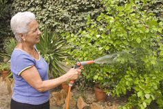 Watering my plants. Senior lady watering her plants Stock Image