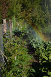 Watering the orchard with a rainbow - vertical Stock Image