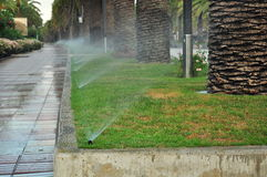 Watering of palm tree alley stock image