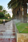 Watering of palm tree alley Stock Photo